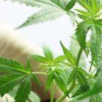 benefits of smoking cbd flower